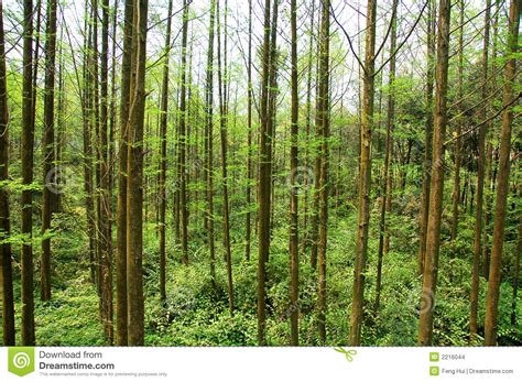 Chinese Forest Stock Images - Image: 2216044