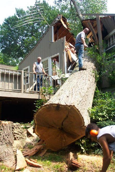 Big tree fell down on a house (3 photos) - Izismile