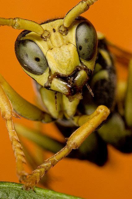 Surprised | Cool insects, Insect photography, Bugs, insects