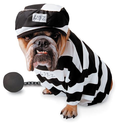 Dog Halloween Costumes | Picture Record