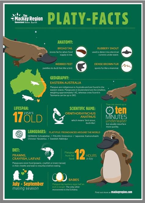 What you need to know about finding platypus in Eungella
