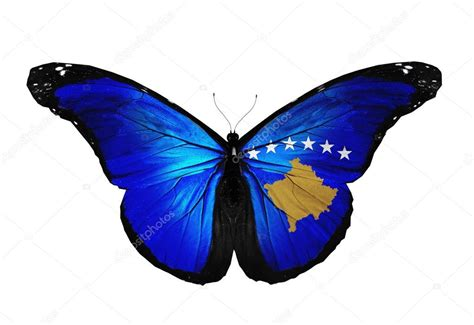 Kosovo flag butterfly flying, isolated on white background