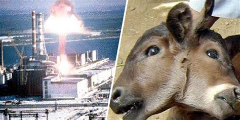 Facts About The Chernobyl Disaster