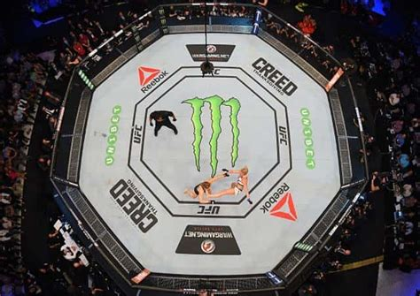 From the octagon to weight categories, here's the ultimate