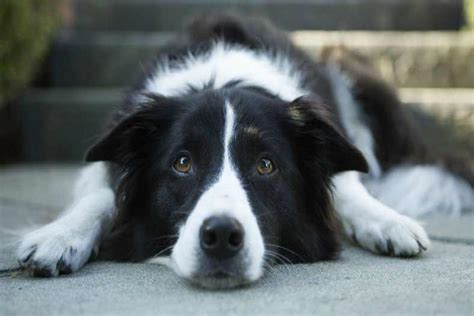 Doxycycline For Dogs: Uses and Side Effects