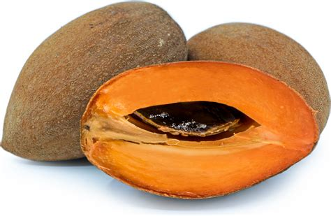 Mamey Sapote Information, Recipes and Facts